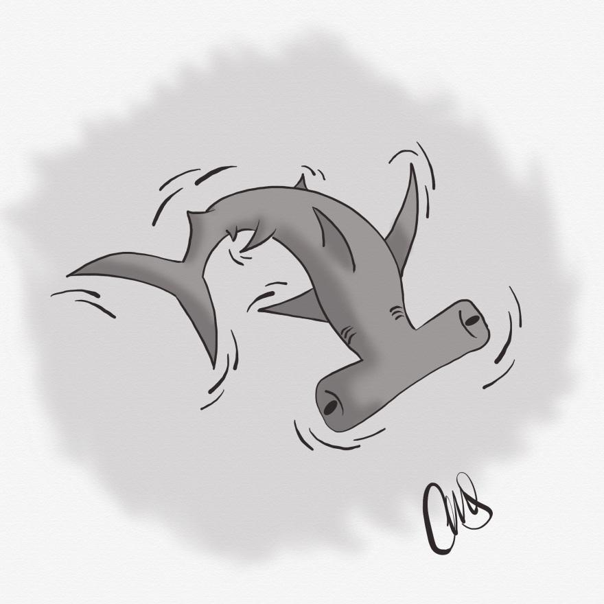 pen and ink illustration of a hammer head shark