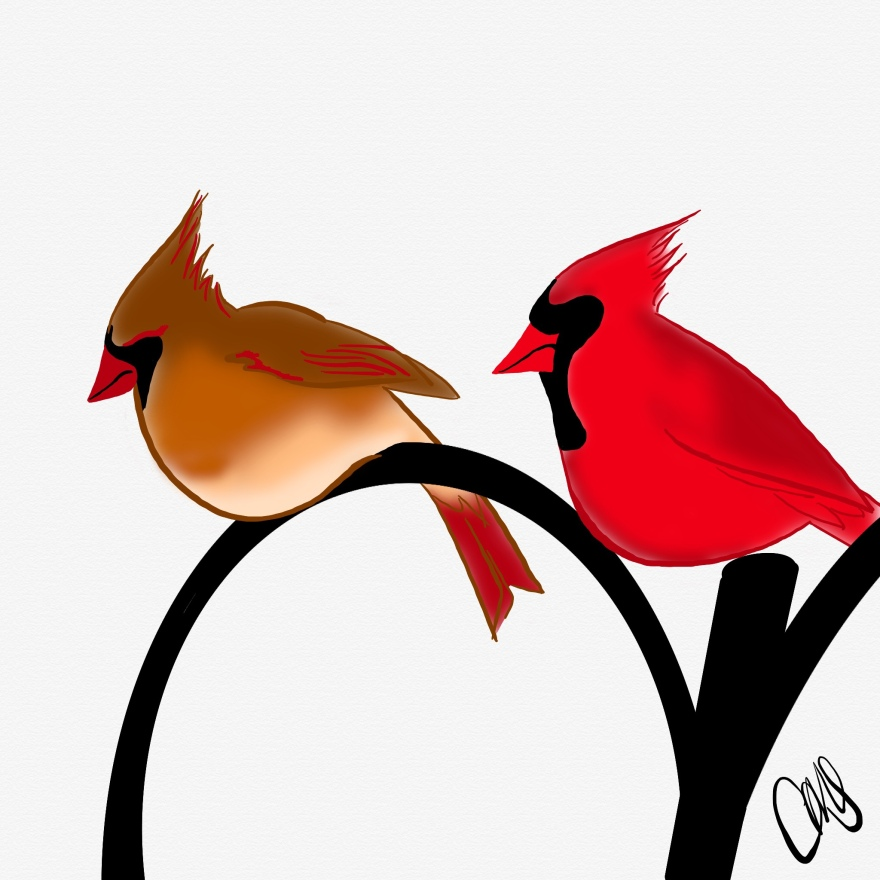 male and female cardinal perched on a black iron fence