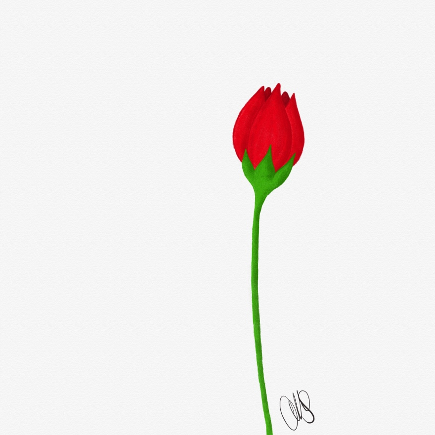 Digital color pencil drawing of a single nondescript red flower slightly to the right of frame; maybe tulip inspired
