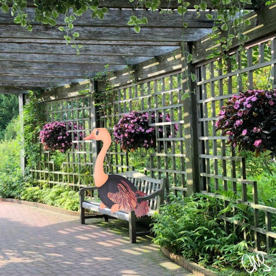 Photograph of a gazebo in the Rose garden @ Chicago botanical gardens. There is a park bench that has an illustrated ostrich sitting on it.