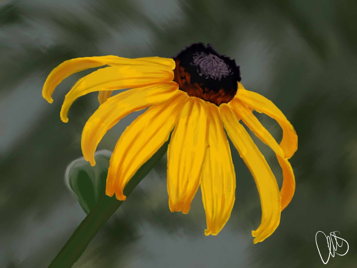 Gauche painting of yellow black eyed susan flower on green background