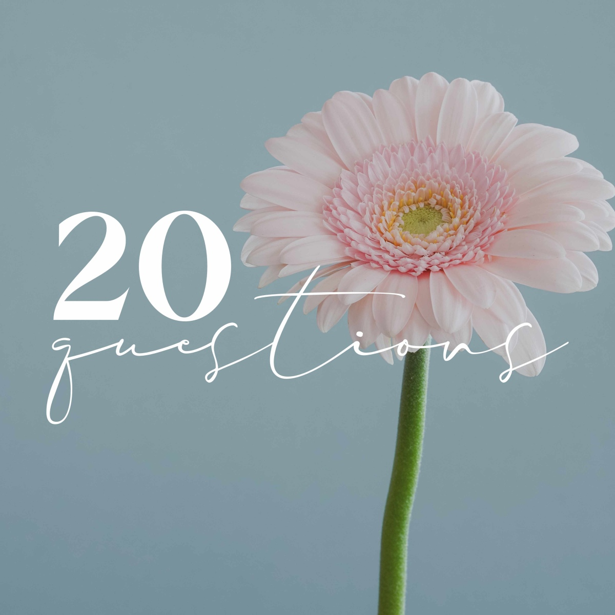 """Simple photo of a pale pink flower set off to the right of a square image on a simple blue grey background. In text on the left of the flower reads """"20 (in print) questions (in script)"""""""